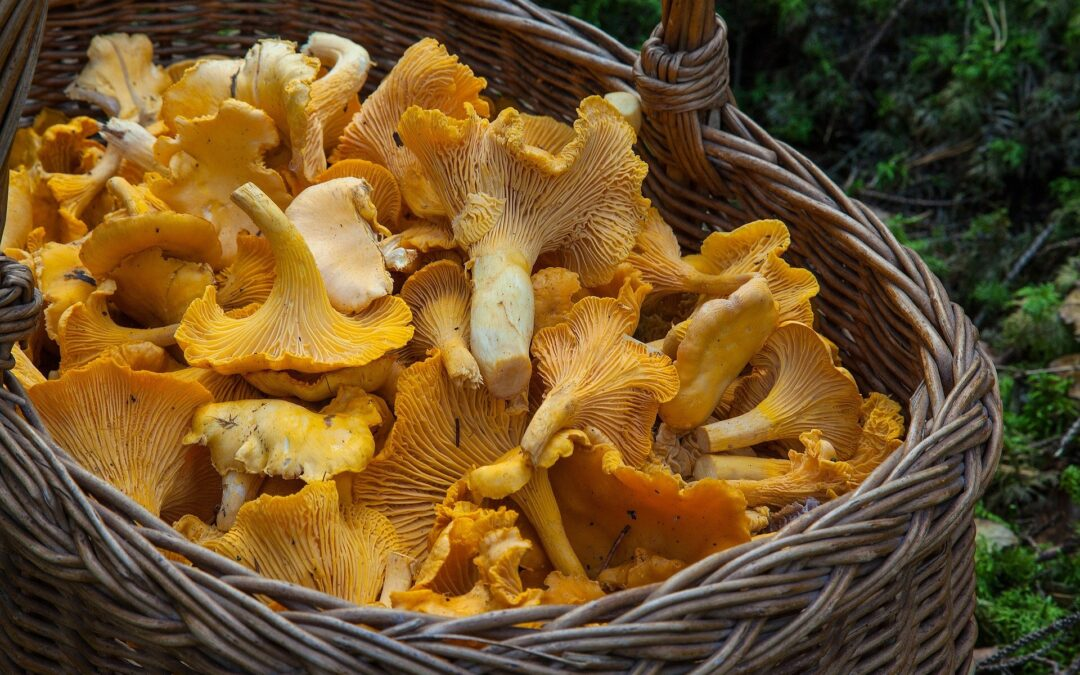3 razones para incluir setas en tu dieta de otoño